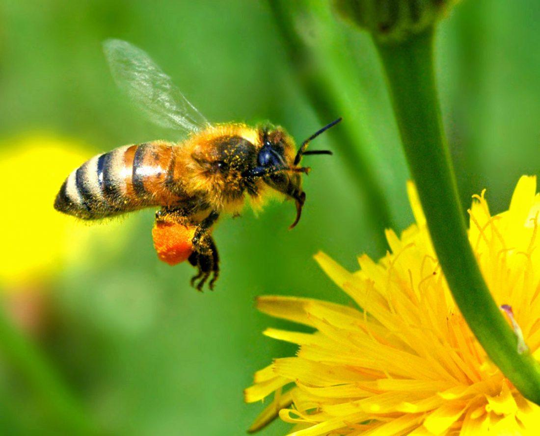 bee products - bee medicine