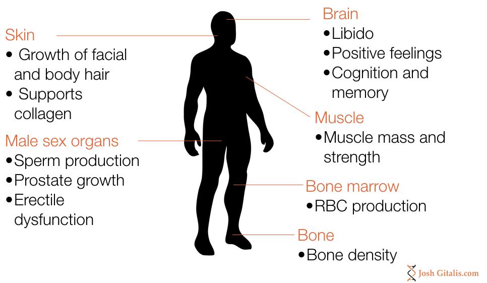 Testosterone effects